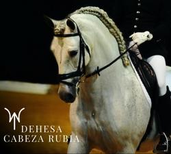vilagarcia-de-arousa-galicia-5